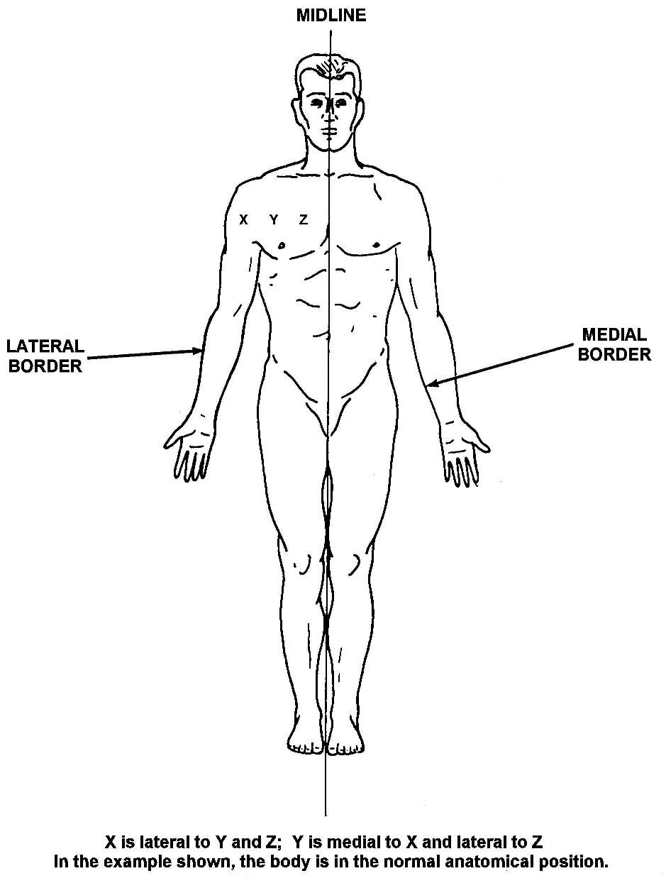 introduction and terminology basic human anatomy 1 2 anatomical position