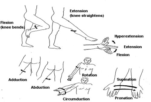 505 types of body movement nursing fundamentals i types of body movement ccuart Choice Image