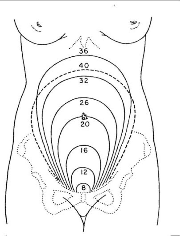 5 02 changes of the reproductive system during pregnancy